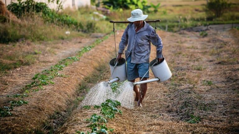 Jury Determines That Monsanto's Roundup Responsible for Lymphoma - EPA Disagrees